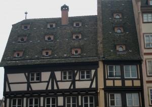 P1011317 300x212 Göçmen Kuşların İzinde; Strasbourg