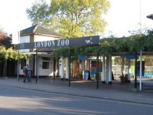 london-zoo[1]