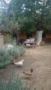 ipek hanım çiftliği